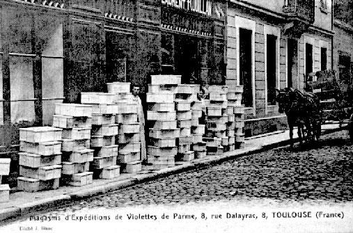 archive-la-violette-2.jpg